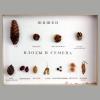 Коллекция Шишки, семена плодов, деревьев и кустарников