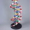 Модель Структура ДНК (разборная)